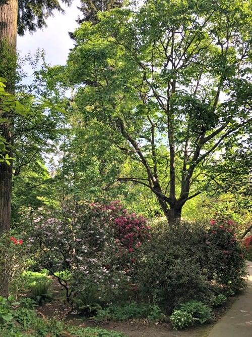 Rhododendron garden in Stanley Park