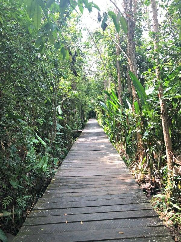 Rimba Orangutan Ecolodge
