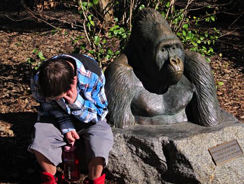 bored boy at zoo