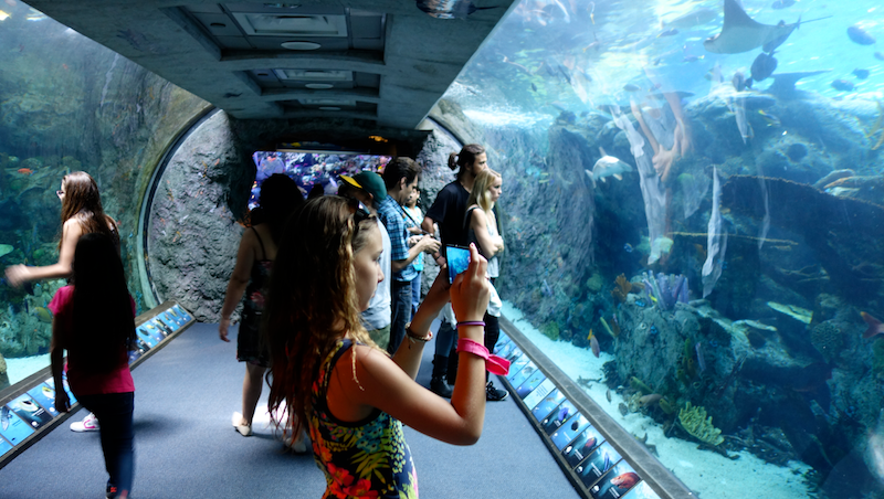 Girl taking photo in walkway tunnel at Aquarium of the Pacific