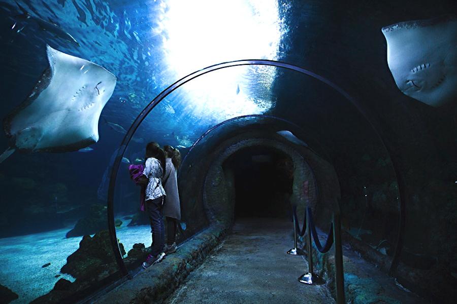 aquarium tunnel (C) 2014 by Ashley Taylor