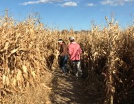 anderson farms 2017 corn maze with kids