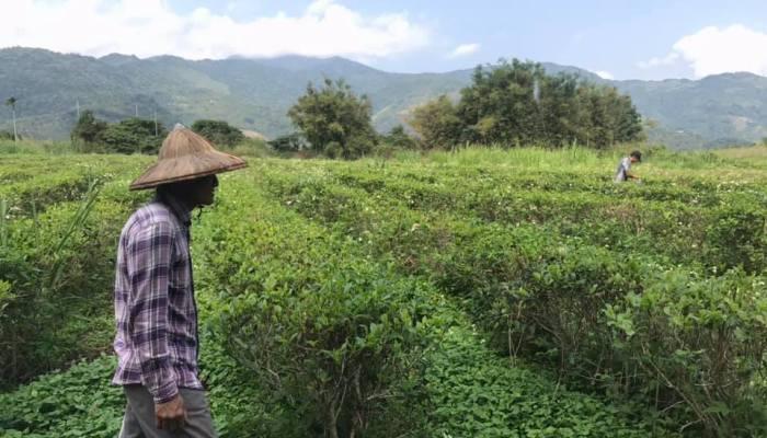 東傑茶園 大同店|台東飲料店|自產自銷的有機茶飲料