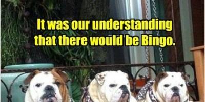 bingo dogs