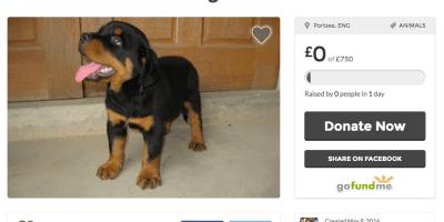 Puppy Africa gofundme