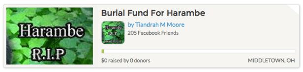 Harambe burial fund Gofundme