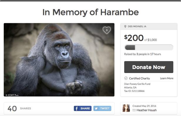 Harambe charity Gofundme