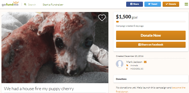 Burned puppy GoFundMe scam