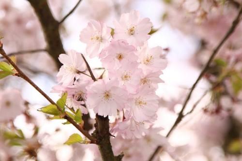 NHKラジオ英会話は春スタート