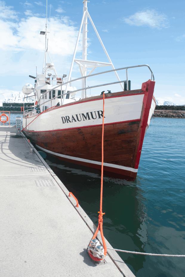 Reisetipps für Island: Whale Watching