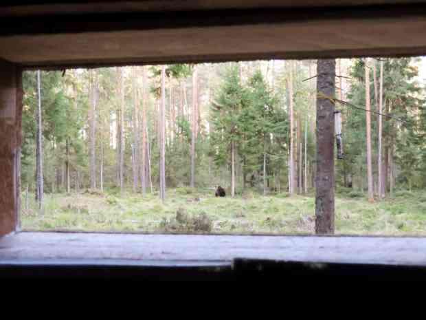 gogirlrun_estland_outdoor_baerenbeobachtung-alutaguse_14