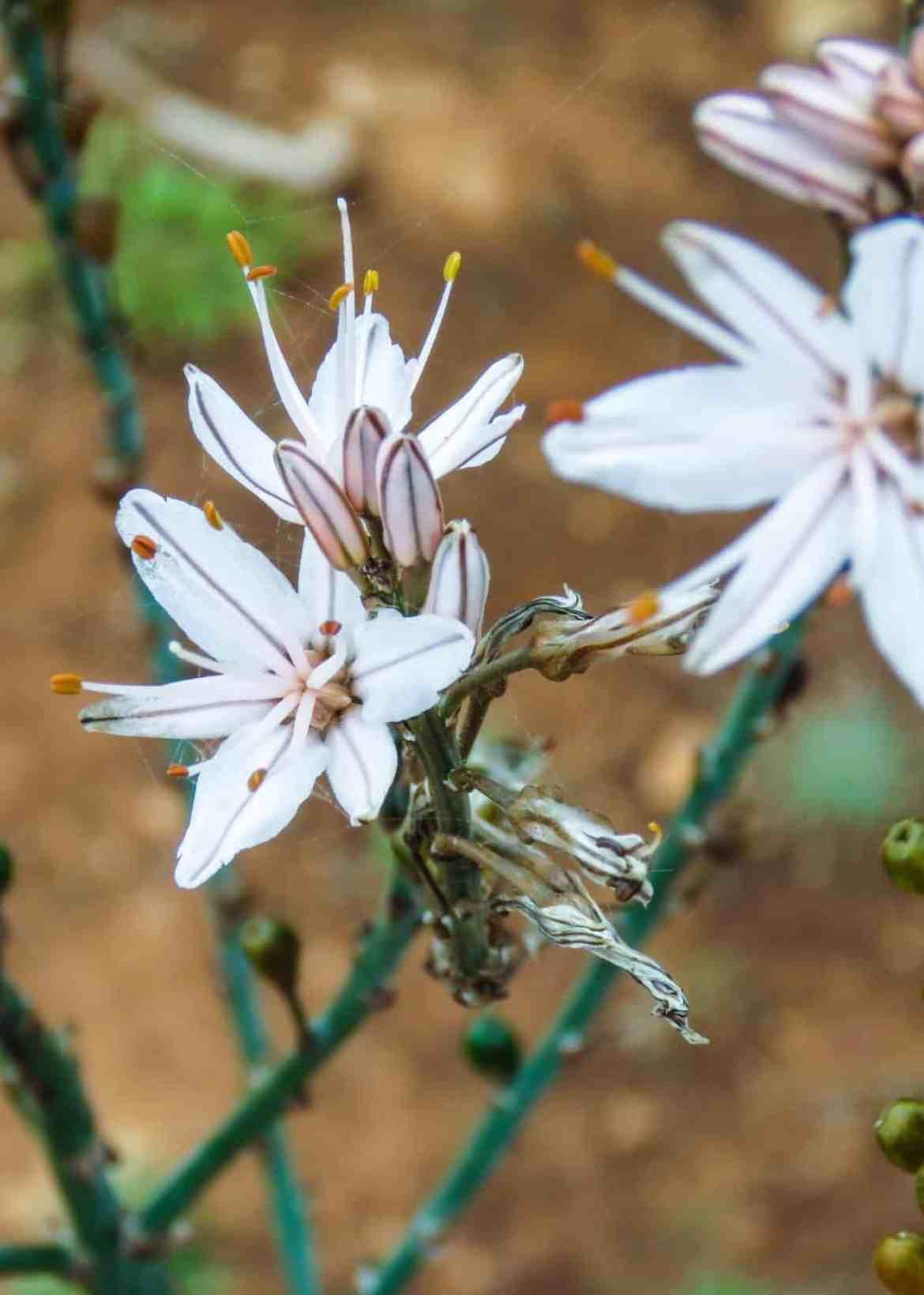 Pflanzen Mallorca