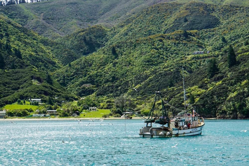 Magical Mail Boat Run in Marlborough Sounds