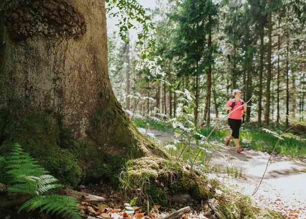 Lange Läufe im Wald