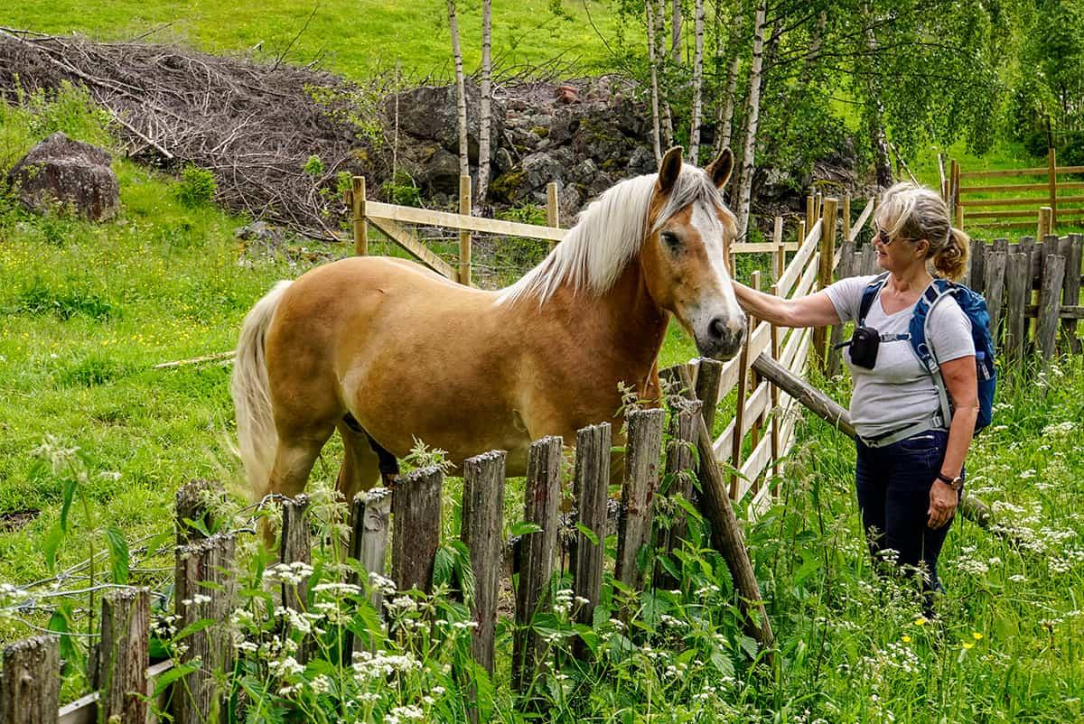 Pferdestreicheln
