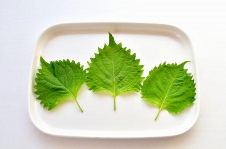 意外!?大葉は栄養豊かな野菜だった!大葉の栄養素と効能はスゴイ!