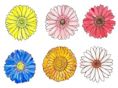 ガーベラの花言葉は色や本数で異なる?!花言葉を添えてプレゼントにも