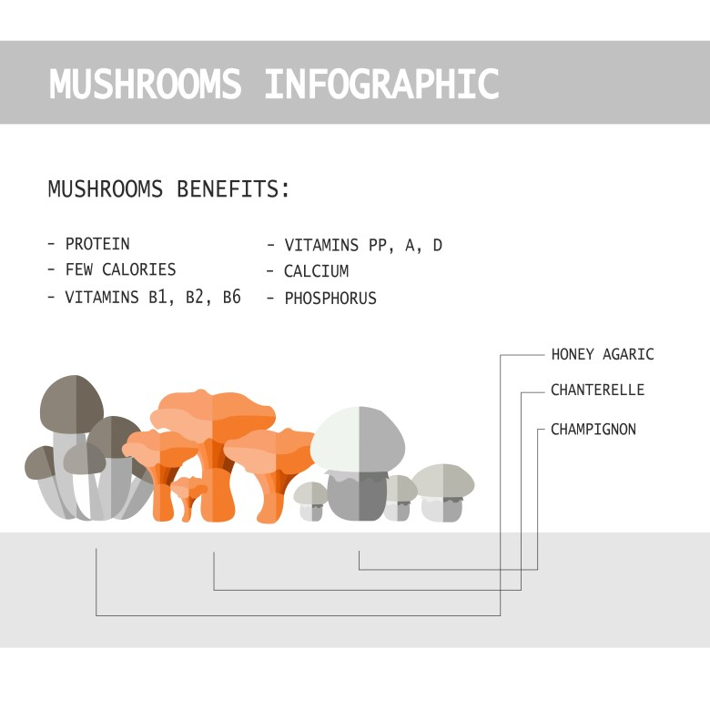 Most important benefits of eating mushrooms