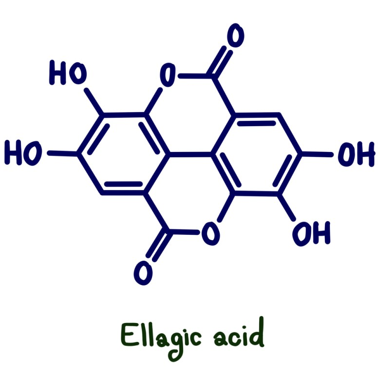 Ellagic acid is an example of phenolic compound