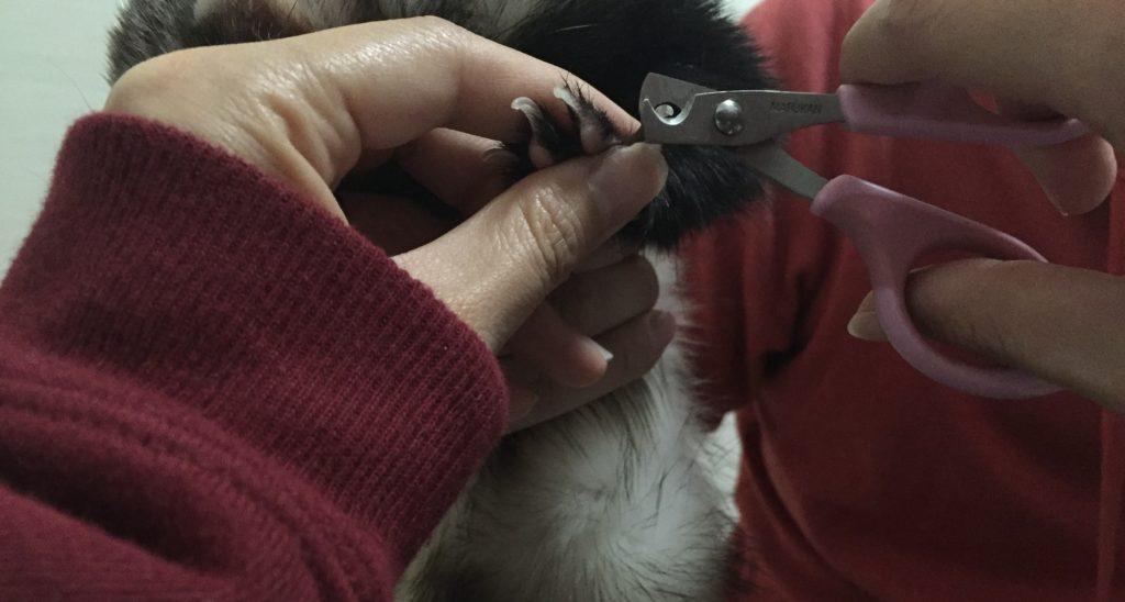 爪切りの持ち方
