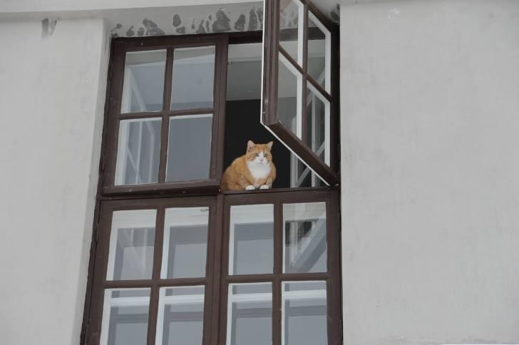 一軒家の2階窓から猫がこちらを見ていた