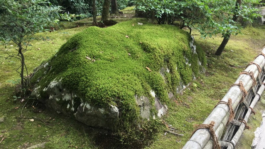 Moss covered rock