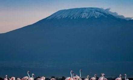 Amboseli National Park – @rupayan_dutta