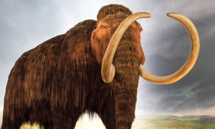 Resurrecting the Woolly Mammoth