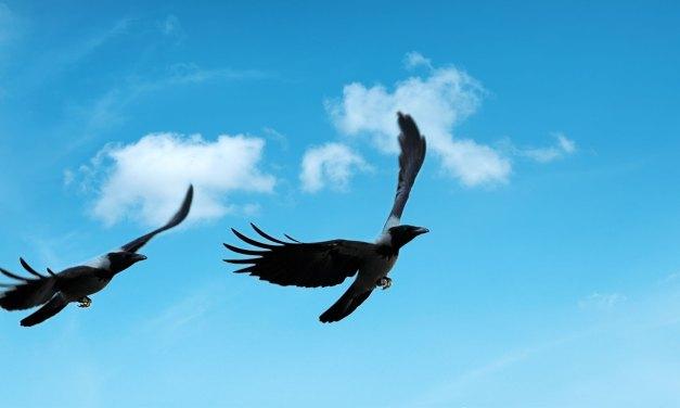 The birds shall fly high