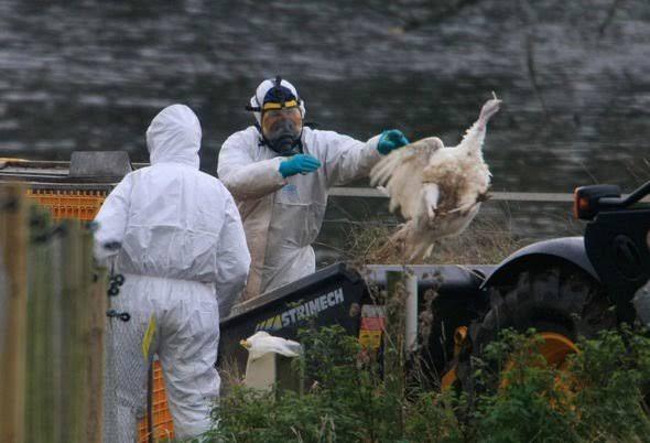 Bird Flu new thread amid covid 19