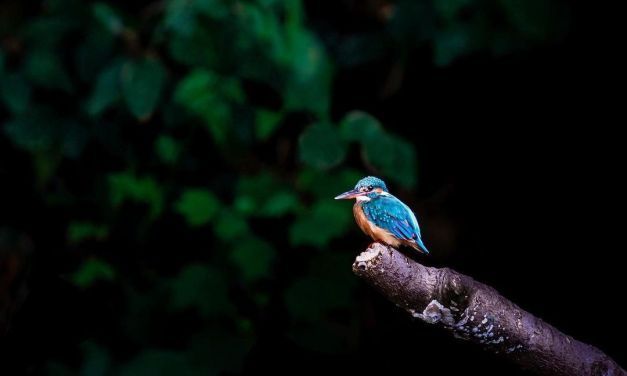 BIRDS PHOTOGRAPHY – Jeevan Vridhan