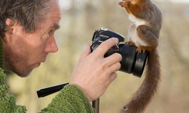 GEERT WEGGEN – photographer specializing in photographing red squirrels