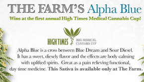 The Farm's Alpha Blue Marijuana Strain out of Boulder, Colorado