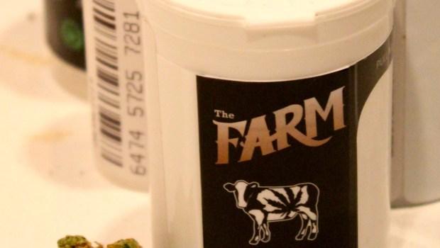 Doox Marijuana from The Farm in Boulder, CO