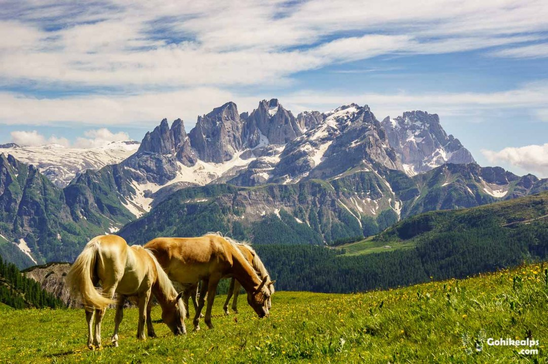 Horses Near Passo di San Pellegrino, on Dolomites Alta Via 2. Pale di San Martino in the background.