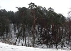 Archangelskoye - ravine & pine forest