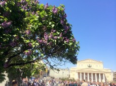 Lilacs and the Big Theater