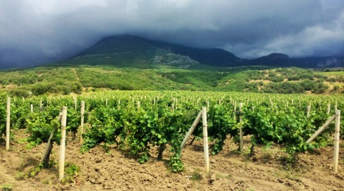 Vineyards, Crimea