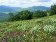 Wildflowers and mountains in Crimea