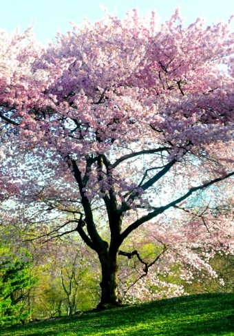 Spring in Central Park NYC 3