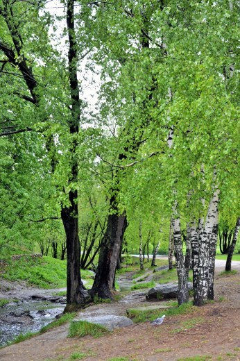 Kolomenskoye Park stream and birch groves