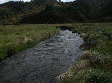 Prestine Vegetation at the Boarder of Kosipe and Sopu - Goilala (100)