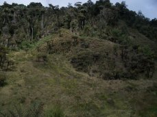 Prestine Vegetation at the Boarder of Kosipe and Sopu - Goilala (109)