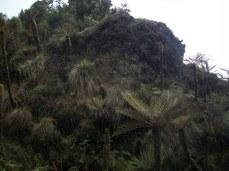 Prestine Vegetation at the Boarder of Kosipe and Sopu - Goilala (118)