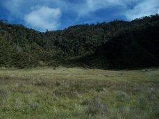 Prestine Vegetation at the Boarder of Kosipe and Sopu - Goilala (79)