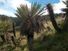 Prestine Vegetation at the Boarder of Kosipe and Sopu - Goilala (95)