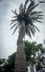 Southeast BotanicalG-38