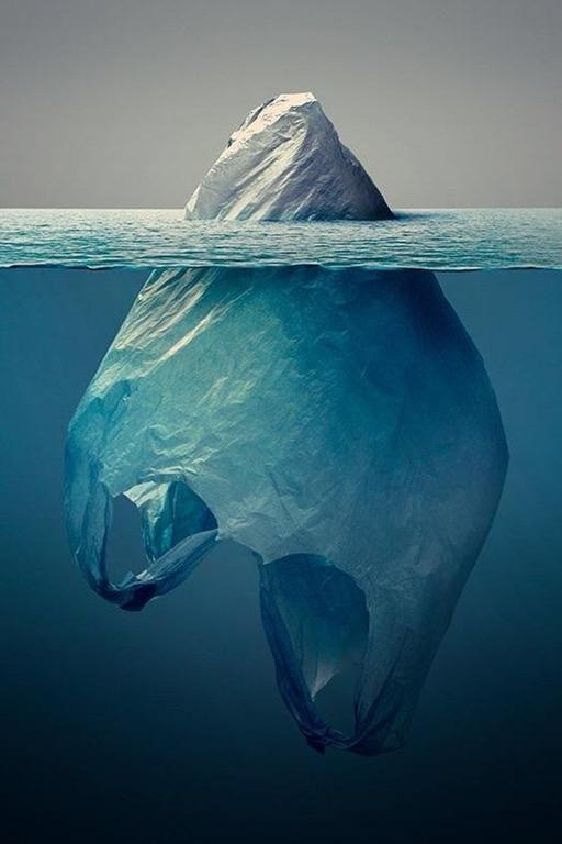Dia Mundial do Meio Ambiente é comemorado no dia 5 de junho