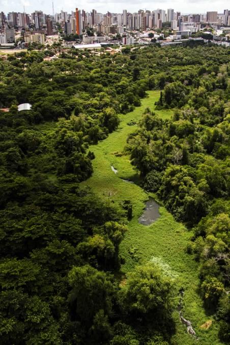 Parque Ecológico do Rio Cocó, a mais importante área verde e de preservação de Fortaleza