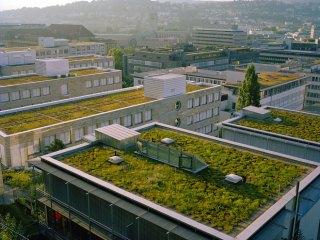 telhados verdes